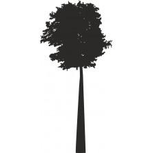 Drzewo 11