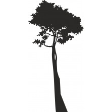 Drzewo 13